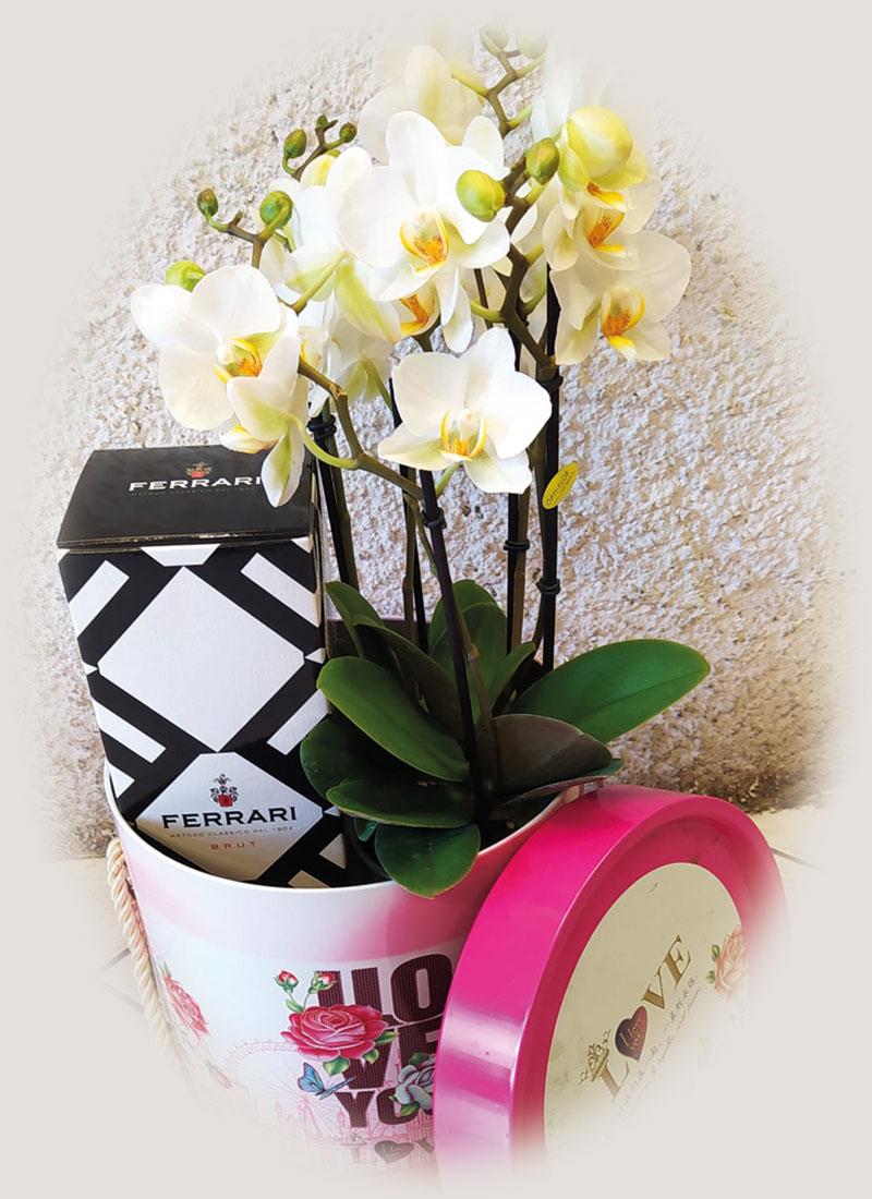 home_orchidea_01