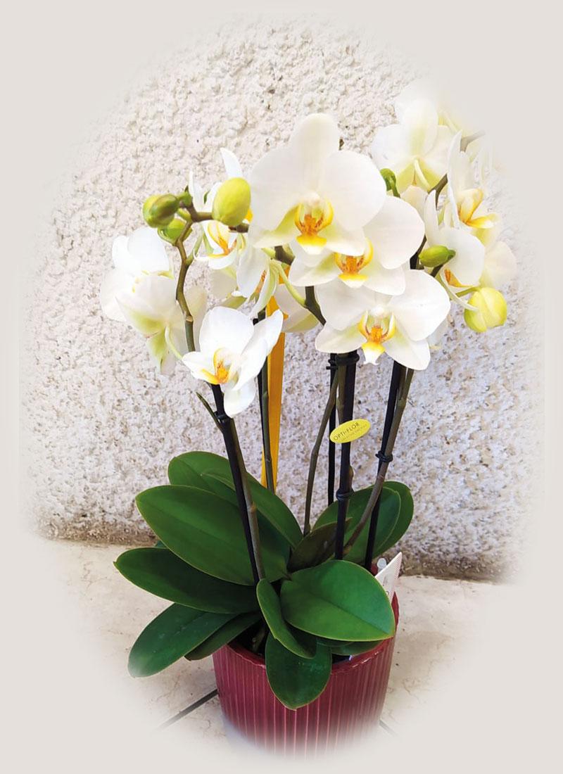 home_orchidea_02
